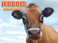 Visit Jervois Primary School