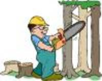 Visit GumnutsTree and Stump Removal